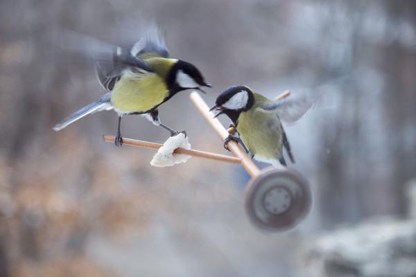9/10 – Unconventional Variant of a Bird Feeder by Dorogaya