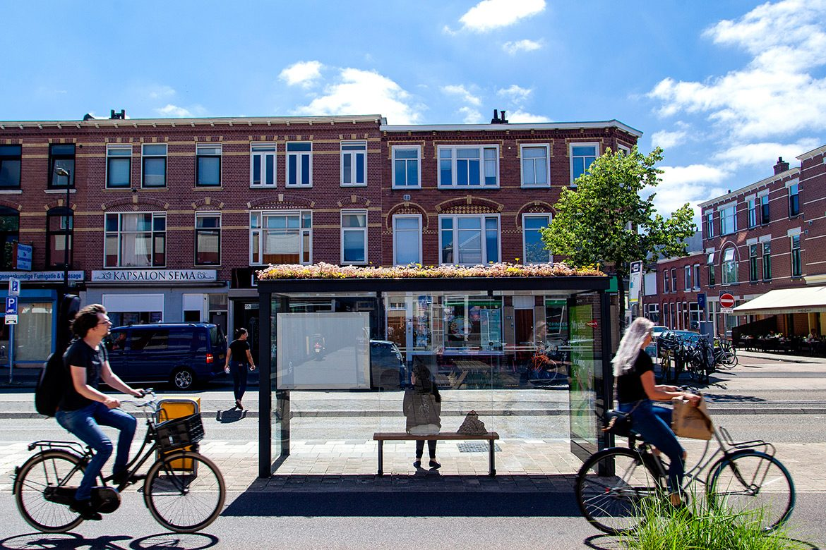 Over 300 Bus Stops in Utrecht Were Converted into Bee Sanctuaries to Stop Bee Extinction