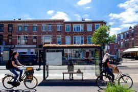 Over 300 Bus Stops in Utrecht Were Converted into Bee Sanctuaries to Stop Bee Extinction